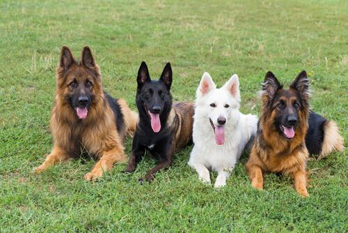 Insegnare al cane a fare i bisogni nel posto giusto