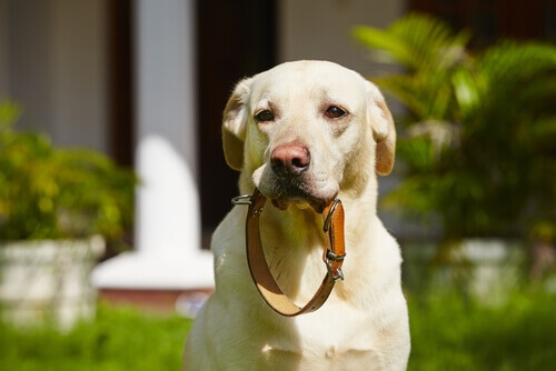 Scoprite i collari e i guinzagli per cani!