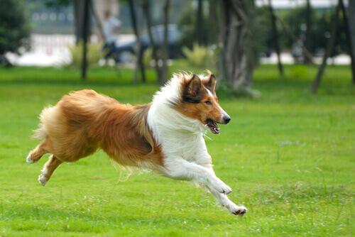 Intelligenza sociale: i cani sanno quando le persone mentono