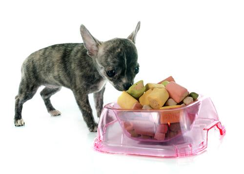 cane-e-cibo