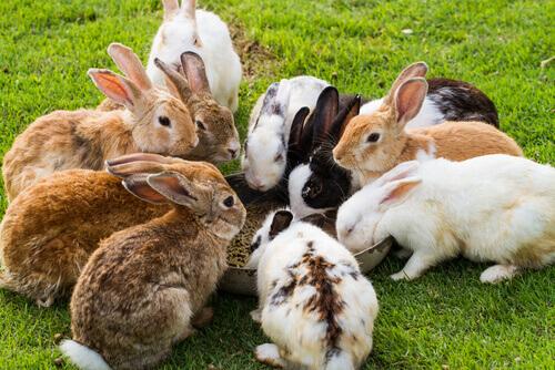 Un coniglio può mangiare le carote?