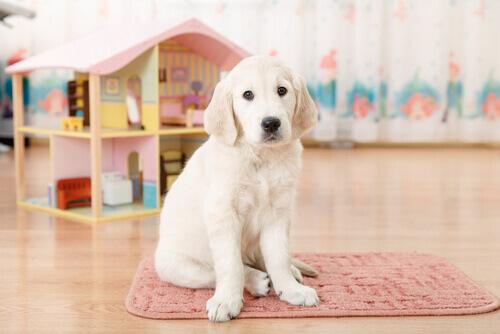 Un'originale cuccia per il vostro cucciolo fatta con un bidone