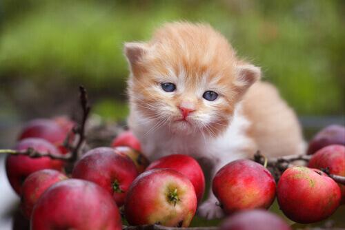 Cosa sono gli antiossidanti e come agiscono sull'alimentazione degli animali?