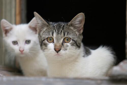 Sintomi di problemi di salute nei gatti
