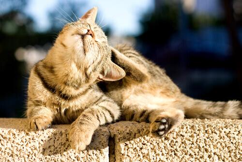 Cos'è l'allergia alimentare dei gatti?