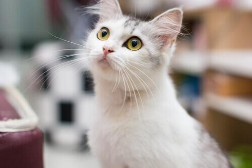 Il mondo attraverso gli occhi del gatto