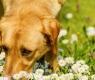 intossicazione-cane