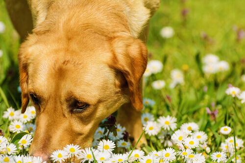 Come comportarsi se l'animale è vittima di un'intossicazione