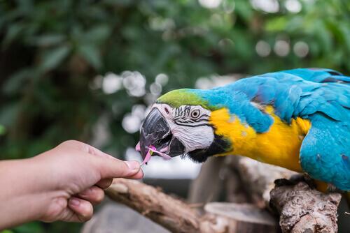 L'alimentazione dei pappagalli