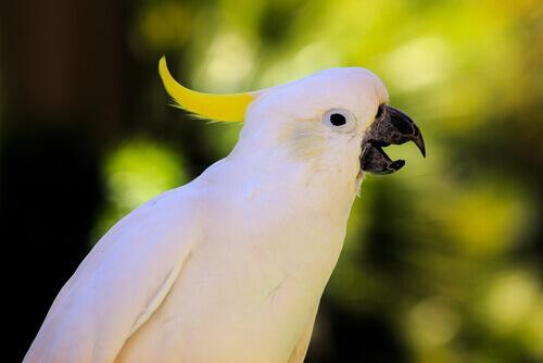 Come insegnare al pappagallo a parlare?
