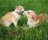 parassiti-cani-gatti