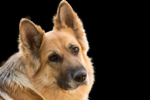 Il diabete nei cani