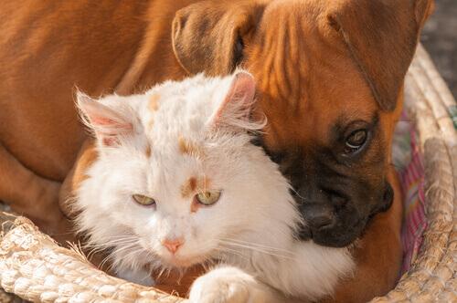 Cosa sono le zoonosi?