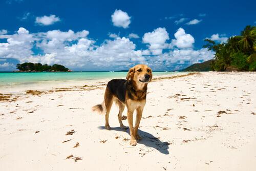 Scoprite le migliori spiagge per cani