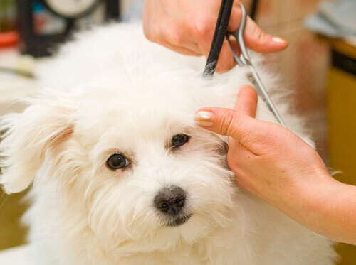 Consigli per la tosatura del cane
