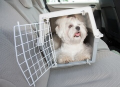 transportino-per-animali
