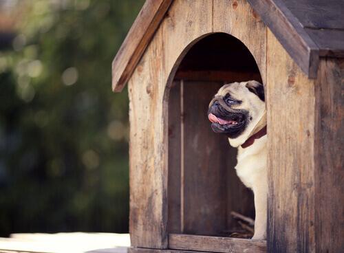 Accessori e prodotti per cani: ecco a voi l'indispensabile