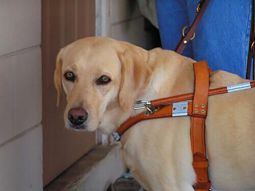 Una cagnolina salva la padrona cieca da un incendio