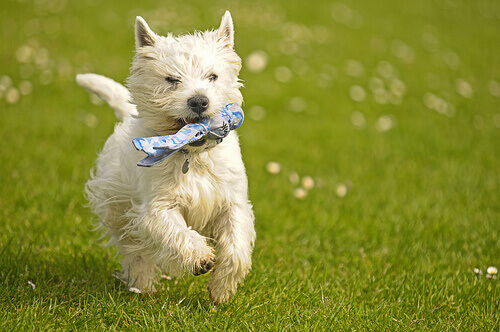 Il rinforzo positivo: educare e fare felice il cane