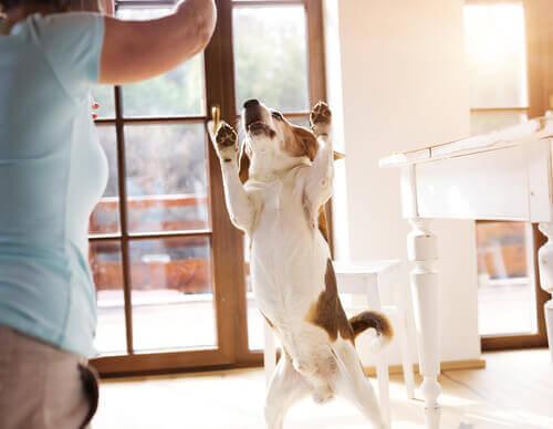 Perché il cane è felice quando tornate a casa?