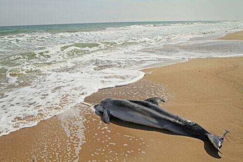Un cane salva un cucciolo di delfino arenato