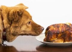 cibo-per-cani