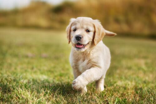 Come nutrire i cuccioli dallo stomaco sensibile
