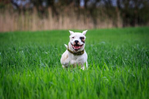 Cani potenzialmente pericolosi: responsabilità