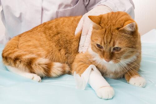 Emorragia nei gatti: ridurre al minimo i danni