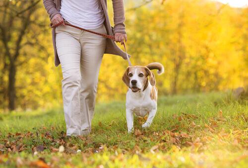 Migliorate il legame con il vostro cane