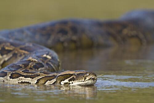 4 curiosità sui serpenti