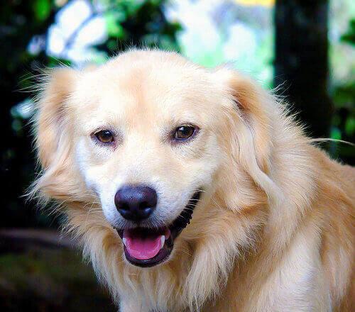 Come prendersi cura di un cane adulto