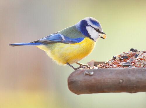 uccellino che mangia