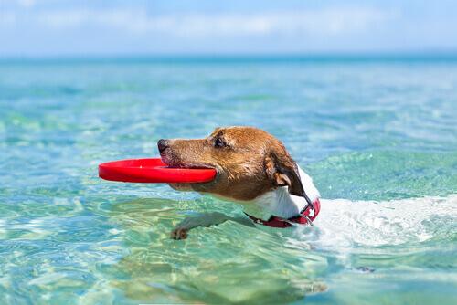 Come andare in vacanza estiva con il cane