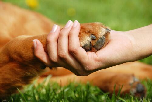 Vi piacciono gli animali? Ecco dieci modi per aiutarli