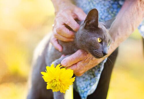 Effetti benefici dei gatti sulla salute