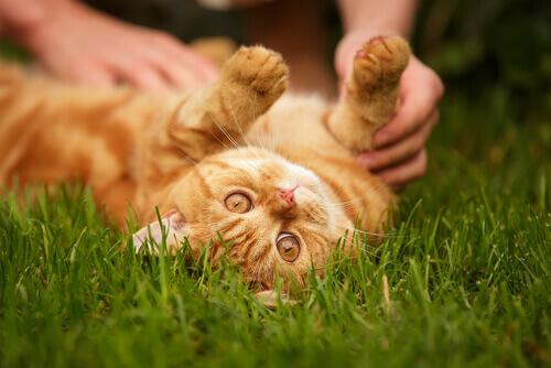 Trucchi per calmare gatti nervosi
