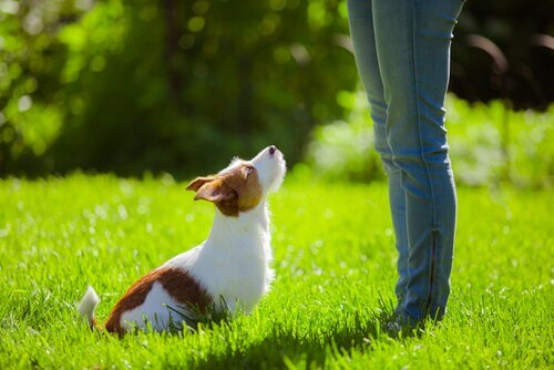 Educare il cane al richiamo