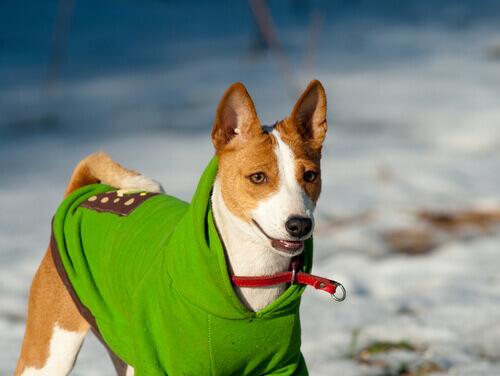 cane-con-vestiti