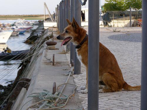 Ricambiate la lealtà del vostro cane