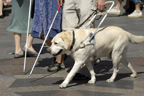 cane-guida