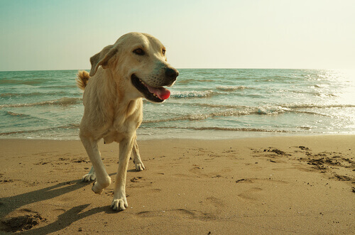 L'addestramento dei cani da salvataggio