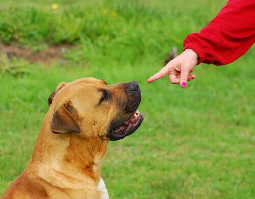 Un cane sordo impara la lingua dei segni