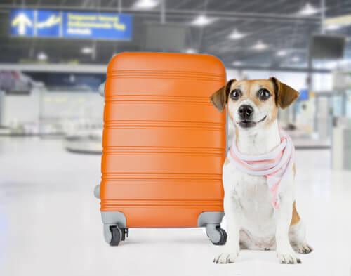cane-valigia