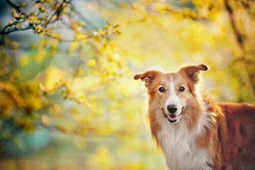 Perché sembra che i cani sappiano l'ora?