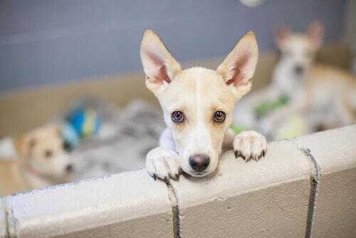 cani-acquistati-in-negozio