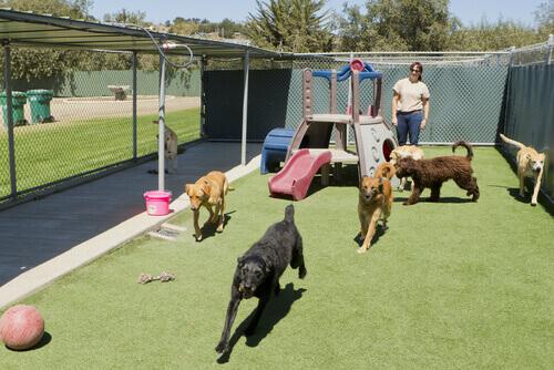 Solo il 44% dei cani e gatti recuperati in Spagna vengono adottati