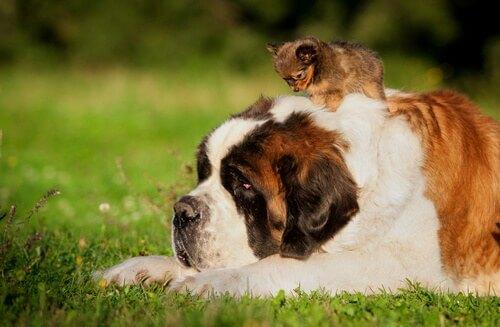 Perché i cani di piccola taglia sono più longevi?