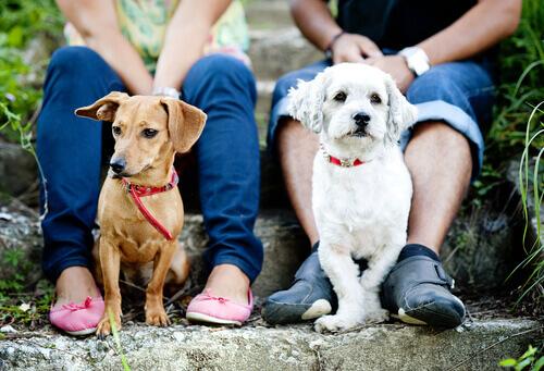Forzare il cane a interagire: un errore da evitare