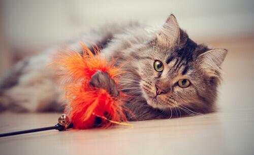 Anche i gatti domestici hanno bisogno di giocare